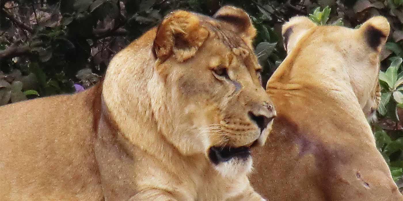 Permalien vers:Plus 60 espèces différentes d'animaux