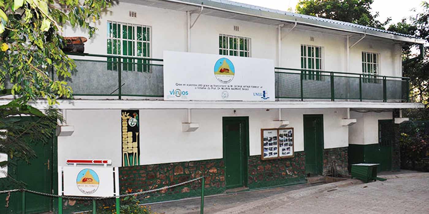 Permalien vers:Le Musée des Termites de Lubumbashi