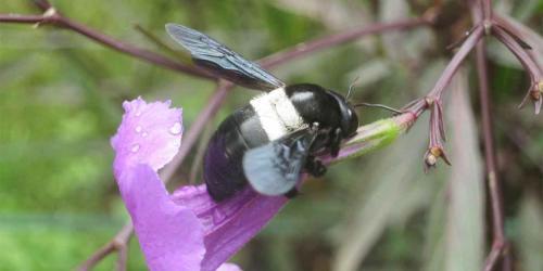 album- 0058 abeille